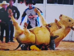 """Boi """"Bandido"""", de 1 tonelada cai em cima do Campeão Brasileiro de Rodeio, Adriano Moraes, na noite desta terça-feira (24), na cidade de Barretos, em São Paulo"""