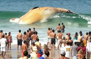 Banhistas observam, ao fundo, corpo de uma baleia encalhada, na orla do Rio