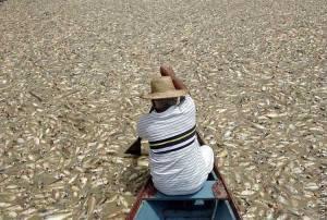 Devido à poluição peixes morre no Rio Amazonas