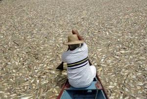 Milhares de peixes mortos apareceram na lagoa do José Walter na ultima quinta (12), ainda não se sabe os motivos, prefeito suspende pescas no local até término de investigação.