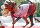 Cãotasia: concurso de fantasias para cachorros acontece neste final de semana em São Paulo