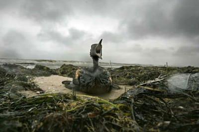 ave em praia poluída